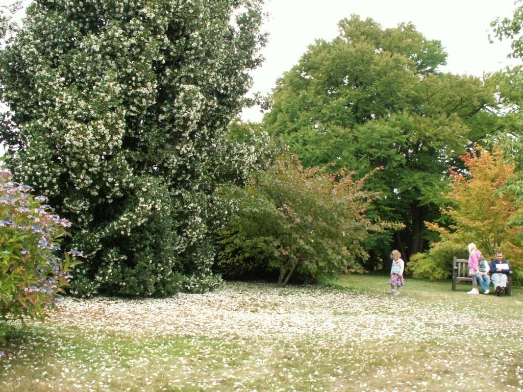Emmetts gardens viaje a visitar jardines ingleses for Jardines de campo