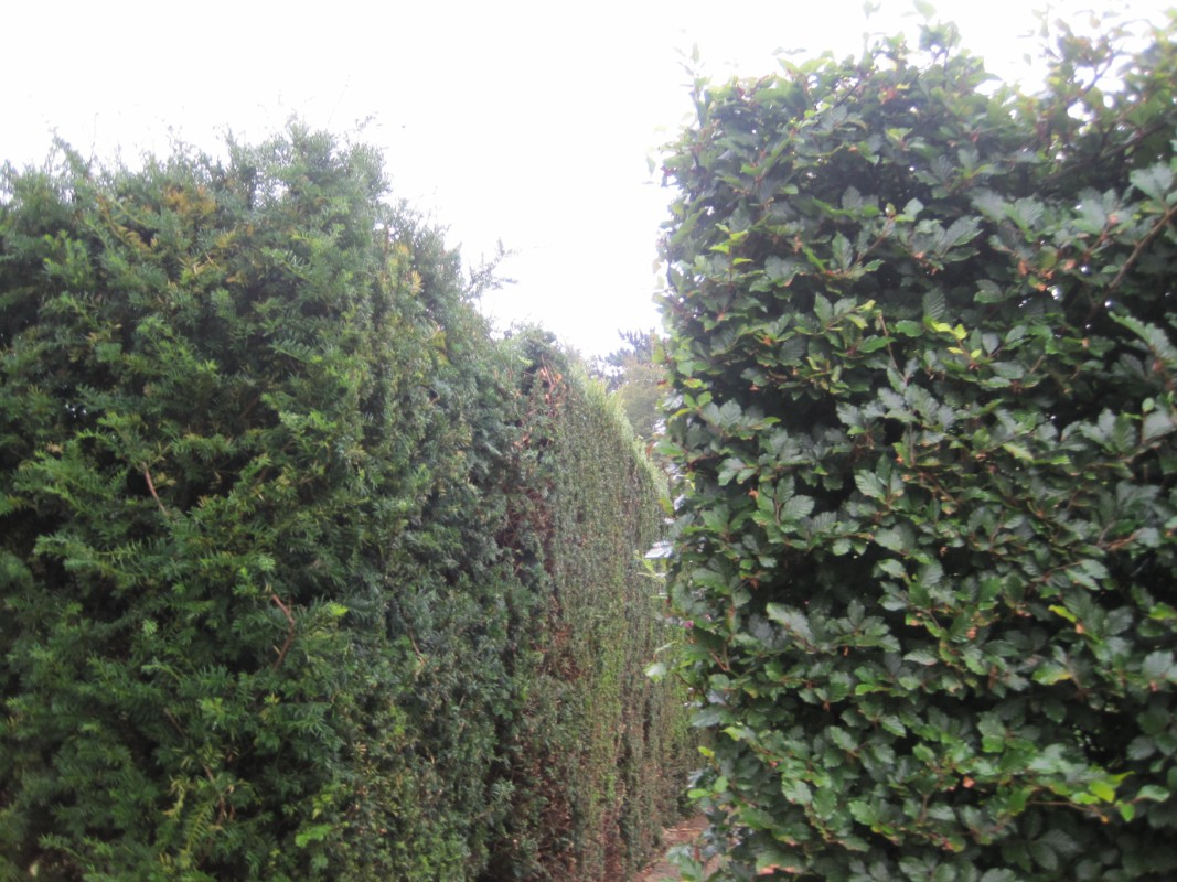 The courts viaje a visitar jardines ingleses - Arbustos ornamentales de jardin ...